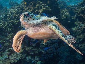 tartaruga e plastic