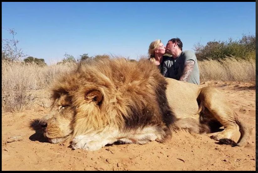 Darren e Carolyn Carter causaram alvoroço depois de se beijarem ao lado do cadáver do leão que mataram