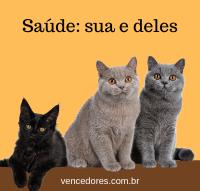 Gatos e Saúde