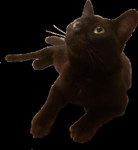 gato-luna