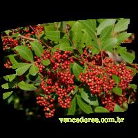 vencedores.com.br (2)