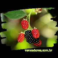 vencedores.com.br